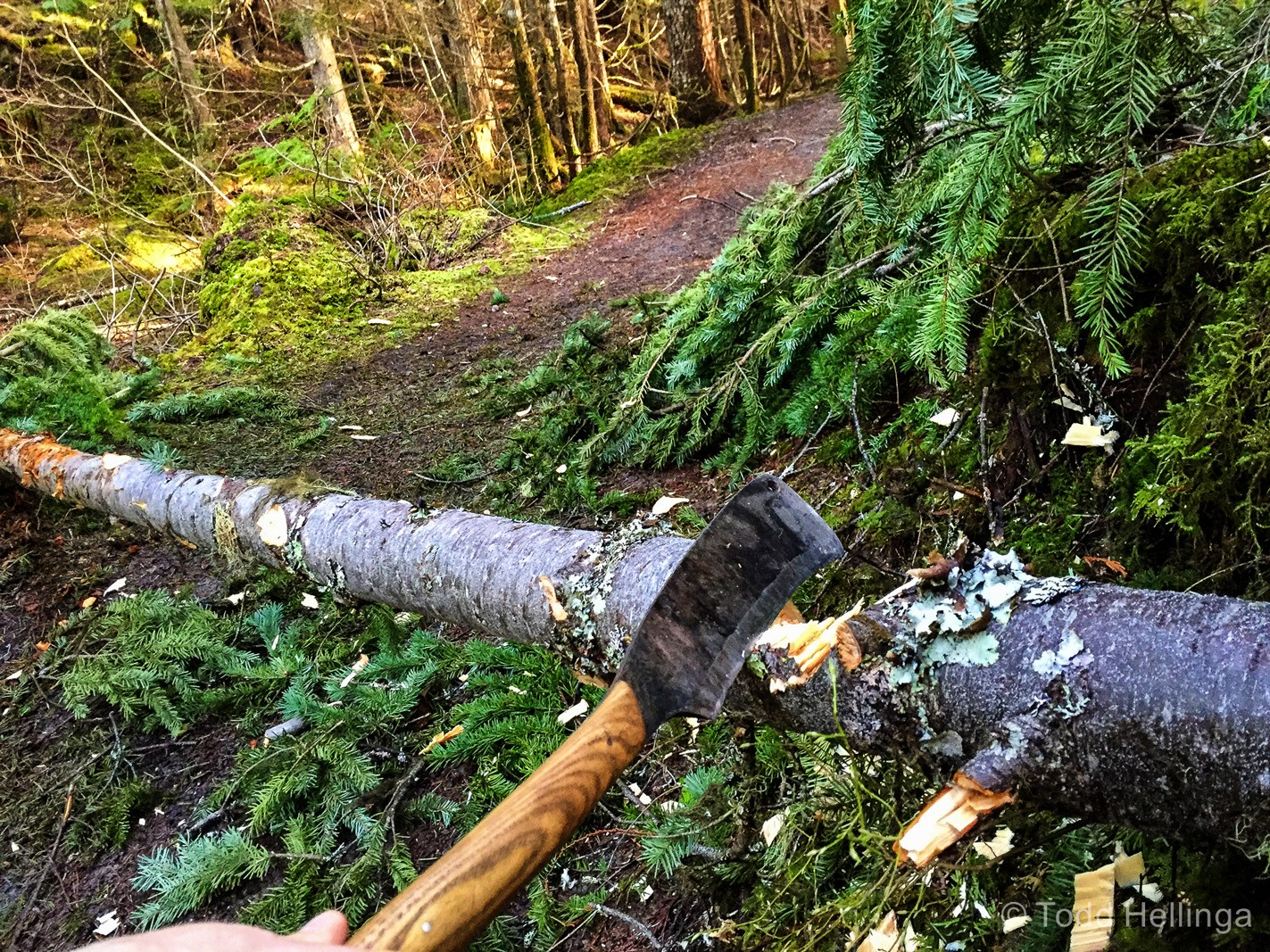 This fresh downed tree was too wet and sticky for my mini handsaw, but was quickly taken care of with the Bushf-r.