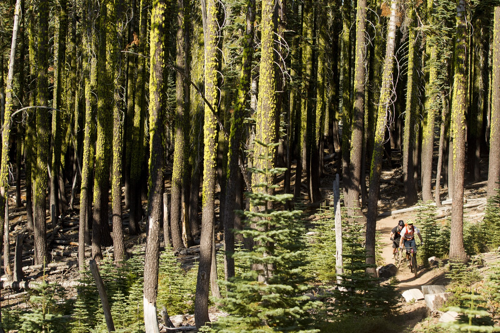 No one could stop to shoot the rowdy, hyper-speed sections of Butcher trail. Too. Much. Fun.