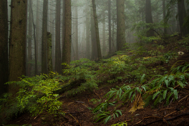 nsmb north shore mountain bike mtb rain fog mist fall winter wet atmosphere fromme seymour cypress